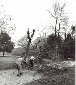 Bomenhakken